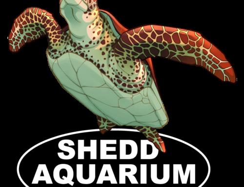 Sea Turtle Shedd