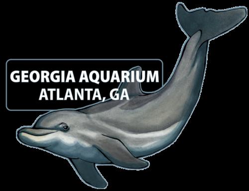 Dolphin Mom & Baby